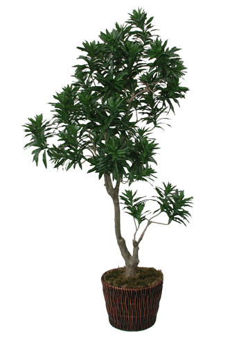 OC, CA High-Quality Artificial Silk Trees & Plants