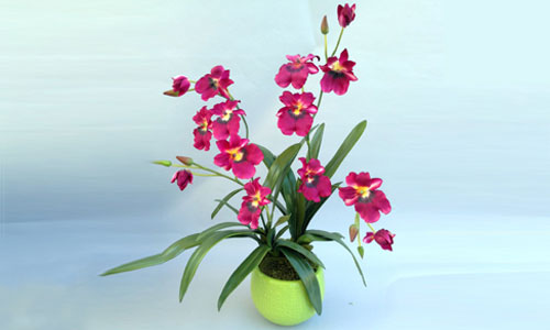 Orchid Flowers for Laguna Hills Homes, Businesses